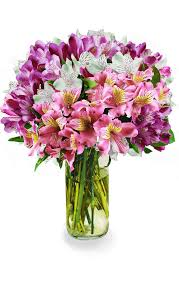 Avas Flowers Coupon Code - Avas Flowers 15 Off Pickup Flowers Coupon Promo Discount Codes 2019 Avas Code The Bouqs Flash Sale Save 20 Last Day Hello Subscription Pughs Flowers Coupon Code Diesel 2018 Calamo Ftd Off Flower Muse Coupons Promo Discount November Universal Studios Dangwa Florist Manila Philippines Valentine Discounts Codes Angie Runs Florist January 20 Ilovebargain