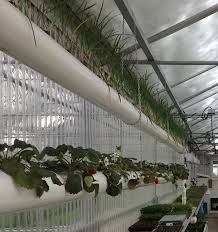 What Is Aquaponics Hydroponic Home Garden Backyard Food Solutionsbackyard Oc Aquaponics Project Admin What Is Learn About Aquaponic Plant Growing Photos Friendly Picture With Amusing Systems Grow 10x The Today Bobsc Ezgro Amazoncom Vertical Gardening Vegetable Tower Indoor Outdoor From Fish To Ftilizer Greenhouse Im In My City Back Yard Yes I Am Satuskaco
