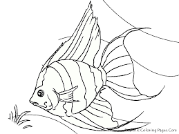 Tropical Fish Coloring Pages Realistic