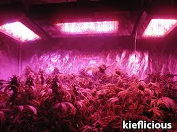 grow light breakdown heat cost yields grow easy