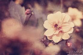 Flowers Uploaded By Bowie On We Heart It
