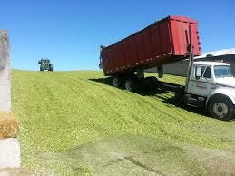 100 Silage Trucks Harvesting Corn Silage Livestock Fencing Maintenance Farmer