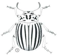 Insect Food Coloring Insects Pages