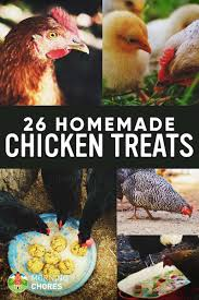 26 Homemade Healthy Chicken Treats Recipes Your Chickens Will Love ... 106 Best Chickens Images On Pinterest Backyard Chickens Chicken Page 4 The Chick Quarantine Of When And How Start Raising Begning Farmers Chickenkeeping Gains Momentum In Anchorage Alaska Diy Coops Plans That Are Easy To Build Diy Chicken Coop 58 Podcasts About Homesteading Ducks Turkeys 854 243 Homestead Coops Salpingitis Lash Eggs Guest Post Want To Raise Backyard