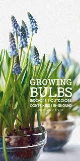 growing bulbs bulbs outdoors and plants