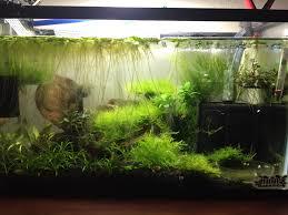 budget lighting options for a planted nano tank low light aquatics