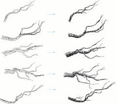 pen and ink tutorial drawing branches