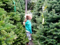 12 Ft Christmas Tree Sams Club by The Ultimate Christmas Tree Buying U0026 Care Guide The Krazy Coupon