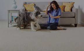 Best Type Of Flooring For Dogs by Lifeguard Carpet Shaw Floors