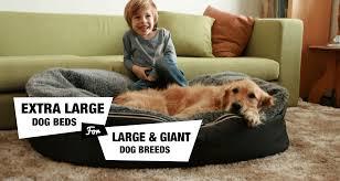 Kuranda Dog Beds by 6 Extra Large Dog Beds For Xl Xxl Dog Breeds Reviewed
