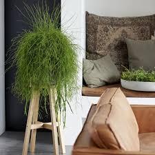 die schönsten hängepflanzen fürs zimmer mein schöner garten
