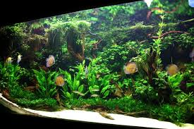 Is White Sand Problematic The Planted Tank Forum