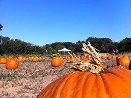 Pumpkin Picking Nj by Decker Farm Pumpkin Picking