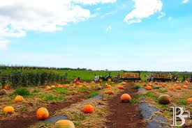 Pumpkin Patch College Station 2014 by Review Aloun Farms Pumpkin Patch Brickberry