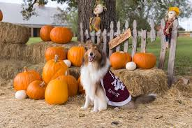 Pumpkin Patch College Station by Reveille Ix On Twitter