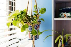 Plants In Bathroom Images by Bathroom Dazzling Cool Summer Rayne Oakes Plant Filled Apartment