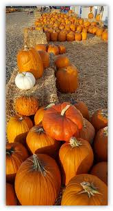 Best Pumpkin Patch Near Roseville Ca by Image008 Png