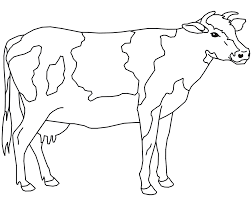Cow Coloring Pages Dairy