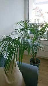 palme pflegeleicht