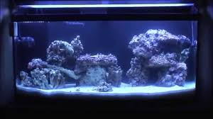 Aquascaping Live Rock Aquarium Aquascaping Rocks Aquascape Designs Ideas Project Reef Rock 21 Dry Walt Smith Bulk Supply Review Real Generation 4 Digitalreefs News Info How To Live Purple Live Rock Youtube Updated Clear Pics Newbies Attempt At Aquascaping So Far 3reef Design Aquafishvietcom Bring Back The Wall News Builders Keeping Austin Club Walls For A Tank Callorecom River Suggestion Planted Forum