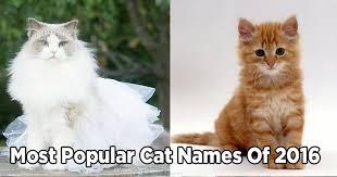 popular cat names the most popular cat names of 2016 purrtacular