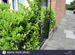Frontgate Christmas Trees Uk by Gate Hedge Path Stock Photos U0026 Gate Hedge Path Stock Images Alamy