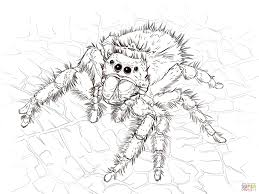 Click The Daring Jumping Spider Coloring Pages To View Printable Version Or Color It Online Compatible With IPad And Android Tablets