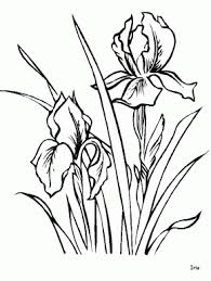 Iris Flowers Coloring Pages