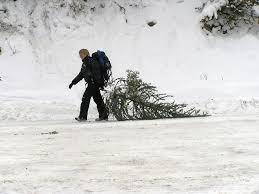 Frasier Christmas Tree Cutting by Arapaho