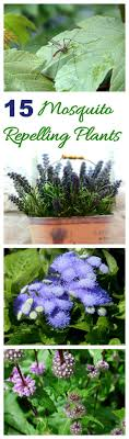 25+ Unique Mosquito Yard Spray Ideas On Pinterest | Mosquito Spray ... Mosquitoproofing Your Garden French Gardener Dishes Mosquito Control Backyard Ponds Home Outdoor Decoration How To Reclaim Yard From Mosquitoes Wisconsin Mommy Mosquitoproof 0501171 Youtube Natural Proof This Year Image 59 Best Images About Dreaming Living On Pinterest 9 Ways Mosquitoproof For Summer Drainage Medium Tips Hgtvs Decorating Design Blog Hgtv