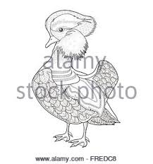 Swan In Zoo Lovely Mandarin Duck Coloring Page Exquisite Style