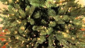 Martha Stewart Pre Lit Christmas Tree Troubleshooting by Colorado Blue Spruce Artificial Christmas Tree Youtube