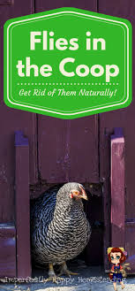52 Best Animals Images On Pinterest | Backyard Chickens, Chicken ... Why Should You Compost Chicken Manure Is Naturally High In 1105 Best Backyard Project Images On Pinterest Raising Baby Chick Playground Coops Pet Chickens And Worming Backyard Controversial Here Are Tips How To Naturally Treat Coccidiosis Your Chickens Natural Treatment Of Vent Prolapse Ducks 61 To Me Raising Means Addressing Healthkeeping Deworming Homesteads