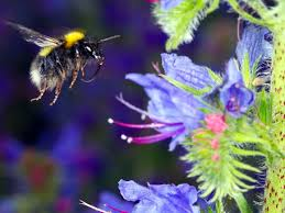 Attracting Insects To Your Garden by Wildflowers For Bees How To Attract Bees To Your Garden