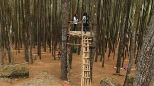 Menyusuri Keindahan Hutan Pinus Imogiri Jogja