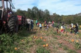 Pumpkin Patches In Arkansas by Pumpkin Patch Activities And Prices Schaefers Pumpkin Patch