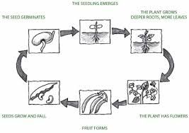 Life Cycle Of A Pumpkin Seed Worksheet by Setting Up And Running A Garden Teaching Toolkit