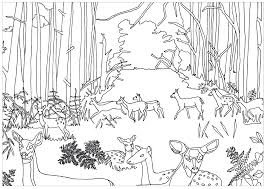 Pinterest Enchanted Forest Coloring Pages Free Page Adult Fawns Rainforest Scene Full Size