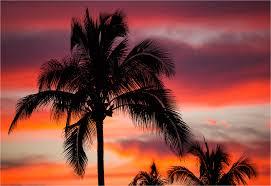 Palm Tree Sunset In Wailua
