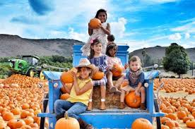 Monrovia Pumpkin Patch by Best Pumpkin Patches And Farms Near Los Angeles