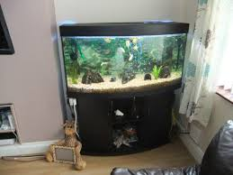 juwel aquarium vision 260 for sale juwel vision 260 4ft tank and sand at aquarist classifieds