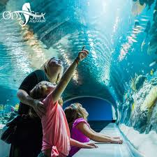 Odysea Aquarium Coupon Code Free Novolog Flexpen Coupon Spell Beauty Discount Code Seaquest Aquarium Escape Room Olive Branch One A Day Menopause Inn Shop Squaw Valley Promo Coach Bags Uk Odysea Aquarium Local Coupons October 2019 Digital Coupons Dillons Acurite Codes Jeans Wordans Ourbus March Dcg Stores Fniture