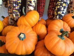 Heather Farms Pumpkin Patch by Happy Jack U0027s Farm