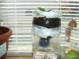 Christmas Tree Waterer 2 Liter Bottle by I Built A Self Waterer Plant In Less Than 25 Mins Last Night How