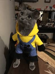 costume for cat amazing minions cat and dogs costume pawsome couture