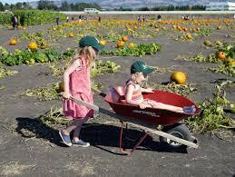 Petaluma Pumpkin Patch Corn Maze Map by Little Hiccups Pumpkin Patch 2014