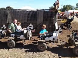 Sauvie Island Pumpkin Patch Cow Train by Clifford Chronicles Swearing In Sunshine And Pumpkins