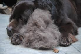 Dog Hair Shedding Blade by Lets Blow Our Coat Month