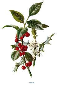 Winterberry Christmas Tree Farm by 316 Best Christmas Botanical Images On Pinterest Botanical