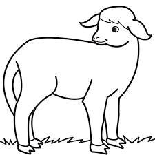 Baby Lamb Drawing Images Pictures